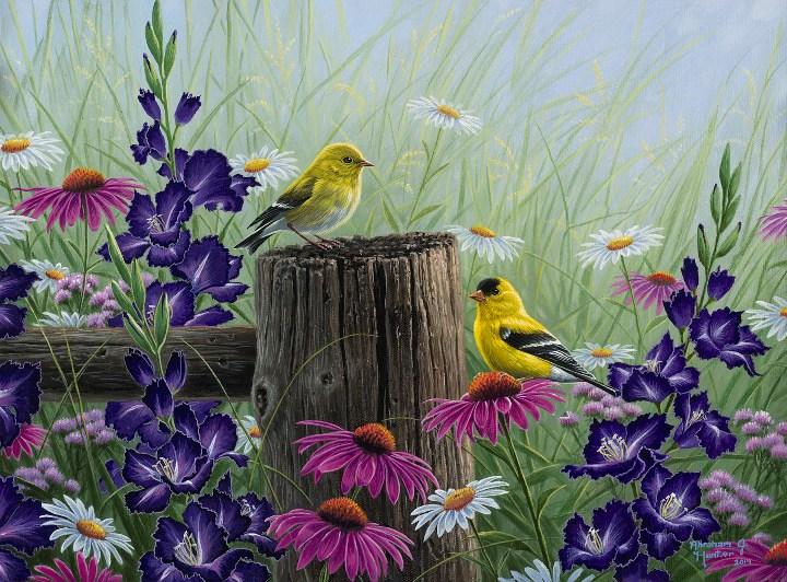 Gold Finch Meadow | Abraham Hunter